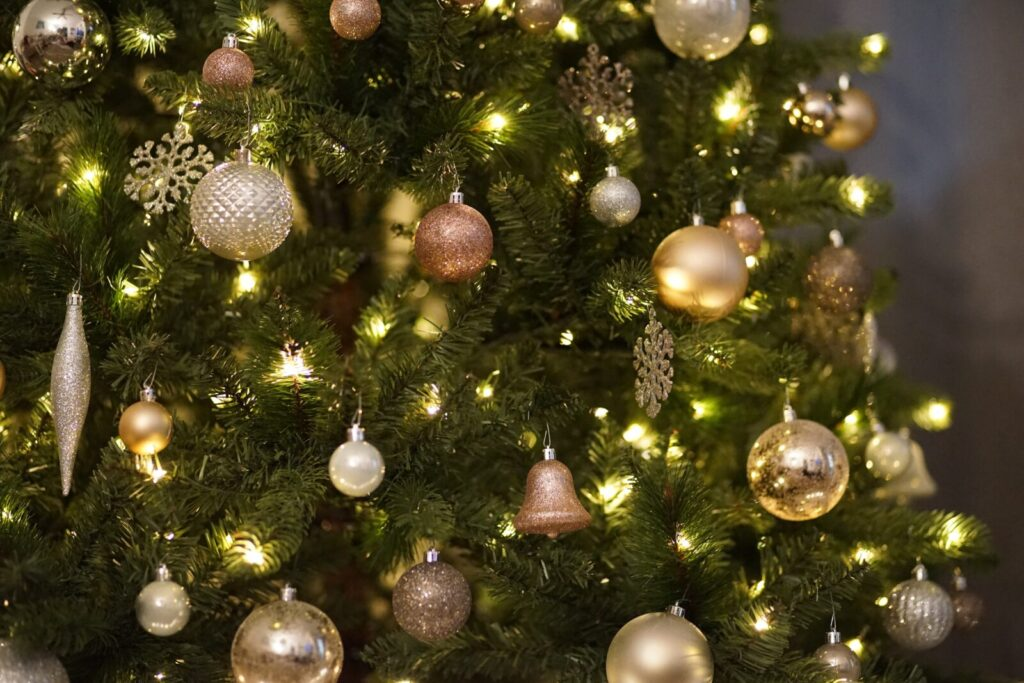 best christmas tree to buy in india
